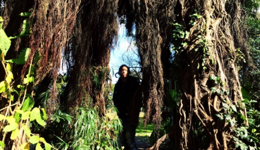 西日本車旅 9,10日目 – 屋久島の縄文杉へ