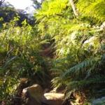 【沖縄最高峰の於茂登岳】登り方と見える景色